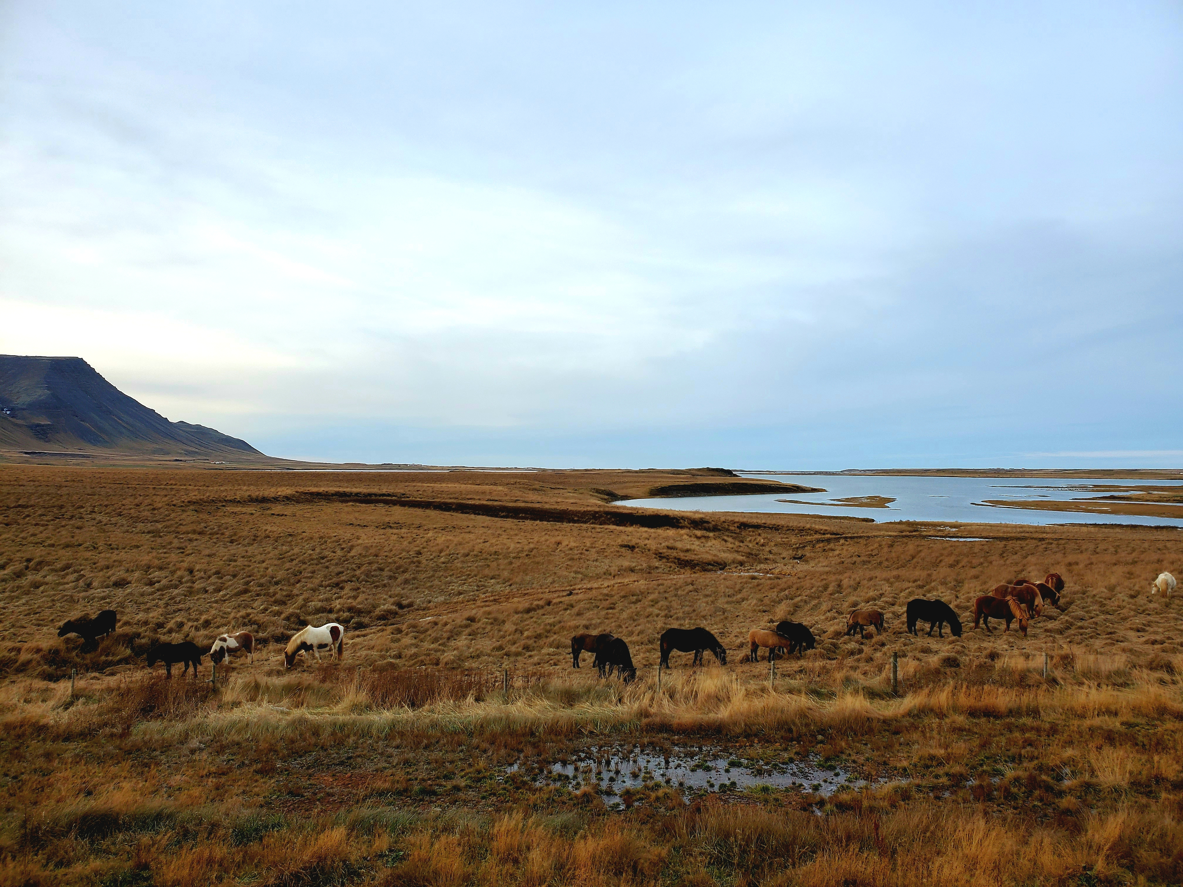 Iceland – first impressions and scenery